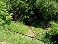 Slovakia Hanigovce 12.JPG