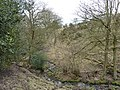 Small stream in a small dell - geograph.org.uk - 1753048.jpg