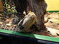 Snakes exposition Doria Museum Genoa 10.JPG