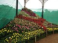 Snap from Lalbagh Flower Show Aug 2013 8403.JPG