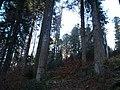 Sommerlicher Herbst Herrenstuhl - panoramio (19).jpg