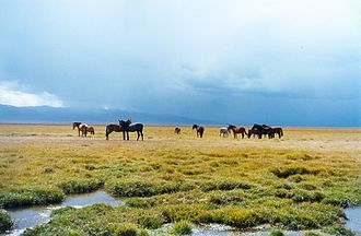 Naryn Region - Horses grazing near Son-Kul