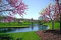 South pond framed by Redbud trees (5264182310).jpg