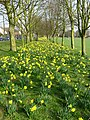 Spring on The Common - geograph.org.uk - 1213824.jpg