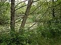 Springbrook Creek 03.jpg