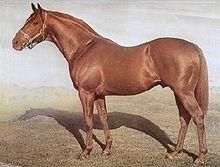 澳大利亚赛马历史