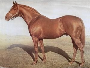 Problem (horse) - Star Kingdom, one of Problem's many successful descendants