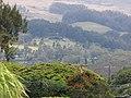 Starr-120530-6777-Eucalyptus sp-habit view Olinda-Hui Noeau Makawao-Maui (24517403133).jpg