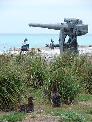 World War II Facilities at Midway - Historic Naval gun on Midway with Laysan albatross