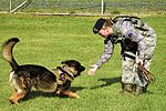 Stepping stones, An Airman's path to K-9 career 150923-F-KR223-059.jpg