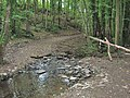 Stepping stones in Physgill Glen - geograph.org.uk - 1539344.jpg