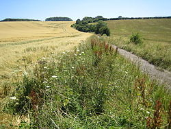 Stopsley Common