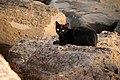 Stray Cat @ Kakaako Park (5608042984).jpg