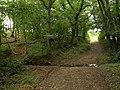 Stream in wood, Knaworthy - geograph.org.uk - 979601.jpg