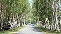 Street in Port Douglas 2.jpg