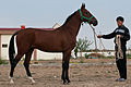 Studfarm in Turkmenistan - Flickr - Kerri-Jo (116).jpg