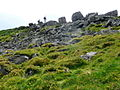 Sugarloaf top rocks - geograph.org.uk - 1300368.jpg