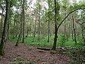 Swamp next to the Teufelsbruch swamp in summer 2.jpg