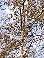 Sycamore PA250111 cave Trail.jpg
