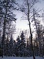 Szymbark las zima 1.jpg