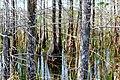 TREES (8540133382).jpg