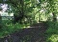 Tarka Trail - geograph.org.uk - 465258.jpg
