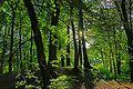 Tarnowskie Góry - panoramio (35).jpg