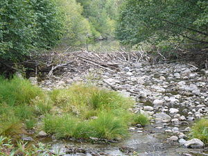 Taylor Creek (Lake Tahoe) - Image: Taylor Creek with beaver dam 2012 09 23