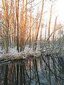 Tegeler Fließ Eichwerder Moorwiesen Winter.jpg