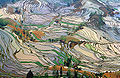 Terrace field yunnan china 2.jpg