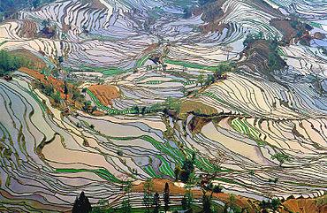 Campi di riso sui terrazzamenti delle colline cinesi