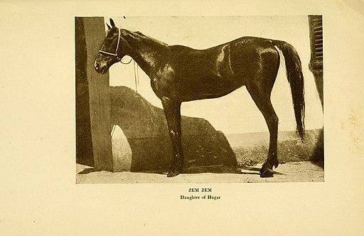 The Arab horse (1906) (19125707394)