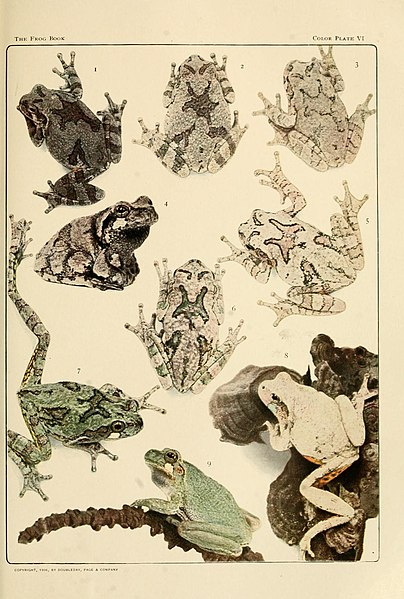 File:The Frog Book (1906) Color plate 06.jpg