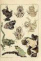 The Frog Book (1906) Color plate 06.jpg