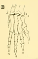 The Osteology of the Reptiles-209 dfg ghj dertg ert.png