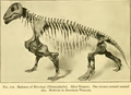 The Osteology of the Reptiles-256 serfgh kjh.png