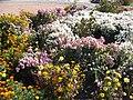 The TNU Botanical Garden in Simferopol, Crimea, Ukraine 39.jpg