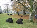 The Village Green, Widecombe in the Moor - geograph.org.uk - 1046225.jpg