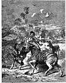 The animals of the world. Brehm's life of animals; (1895) (20586230570).jpg