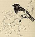 The birds of the Republic of Panama (1965) (20385048535).jpg