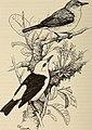The birds of the Republic of Panama (1965) (20385054015).jpg