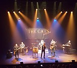 The Cats Aglow Band