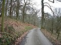The lane leading down to Llananno - geograph.org.uk - 154503.jpg