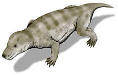Memelilerin atalarından birisi olan Thrinaxodon canlandırması
