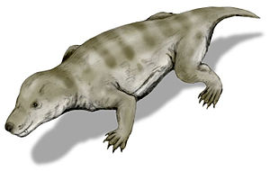 Lebendrekonstruktion von Thrinaxodon liorhinus.