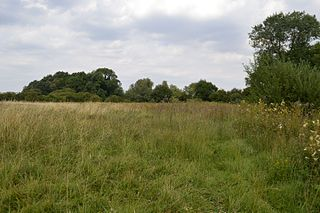 Thriplow Meadows
