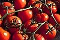 Tomatoes 777.jpg