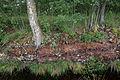 Totes Moor peat exploitation landscape Germany 03.jpg