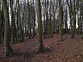 Tower Blocks and The Woodland Walks - geograph.org.uk - 1640235.jpg