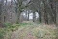 Track through Brickles Wood - geograph.org.uk - 642174.jpg